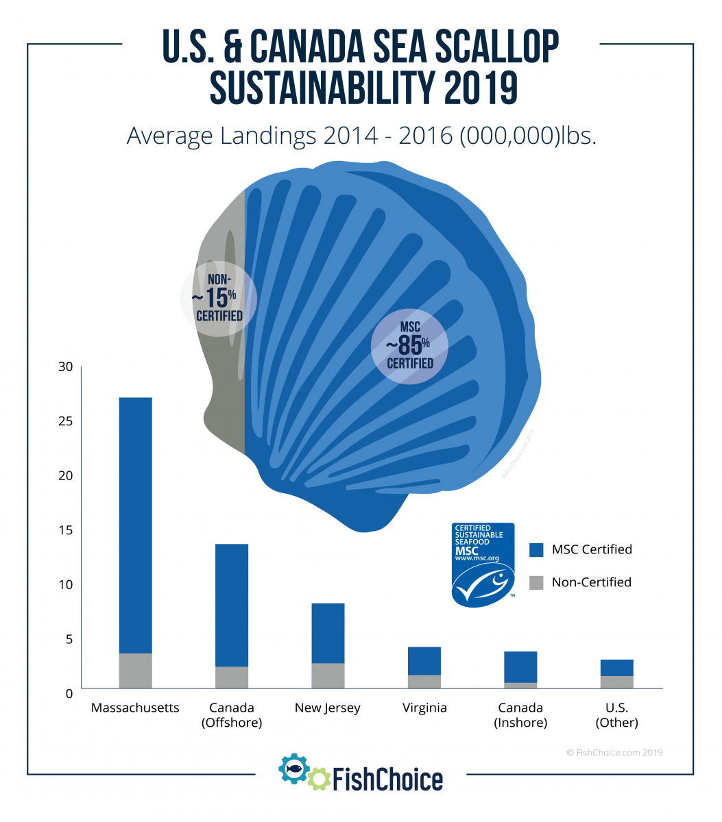 Sea Scallops Sustainability