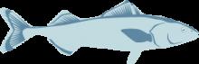 Sablefish